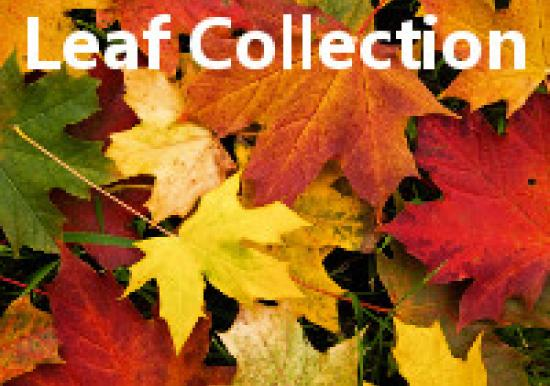 Leaf Collection Starts Monday and Tuesday in November  Slideshow